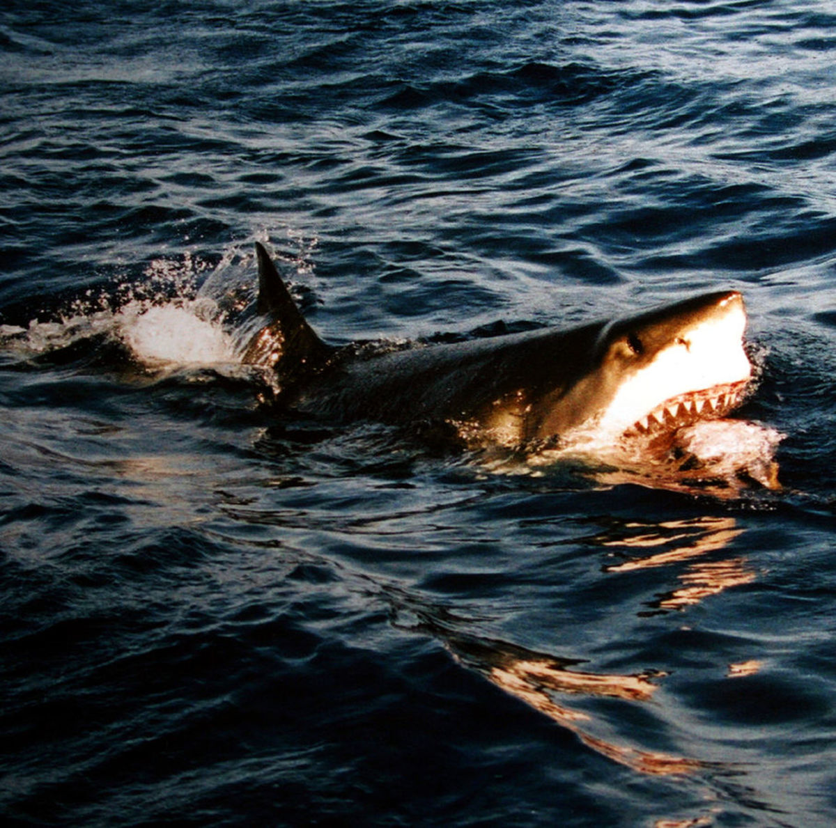 Shark Terror at the Beach
