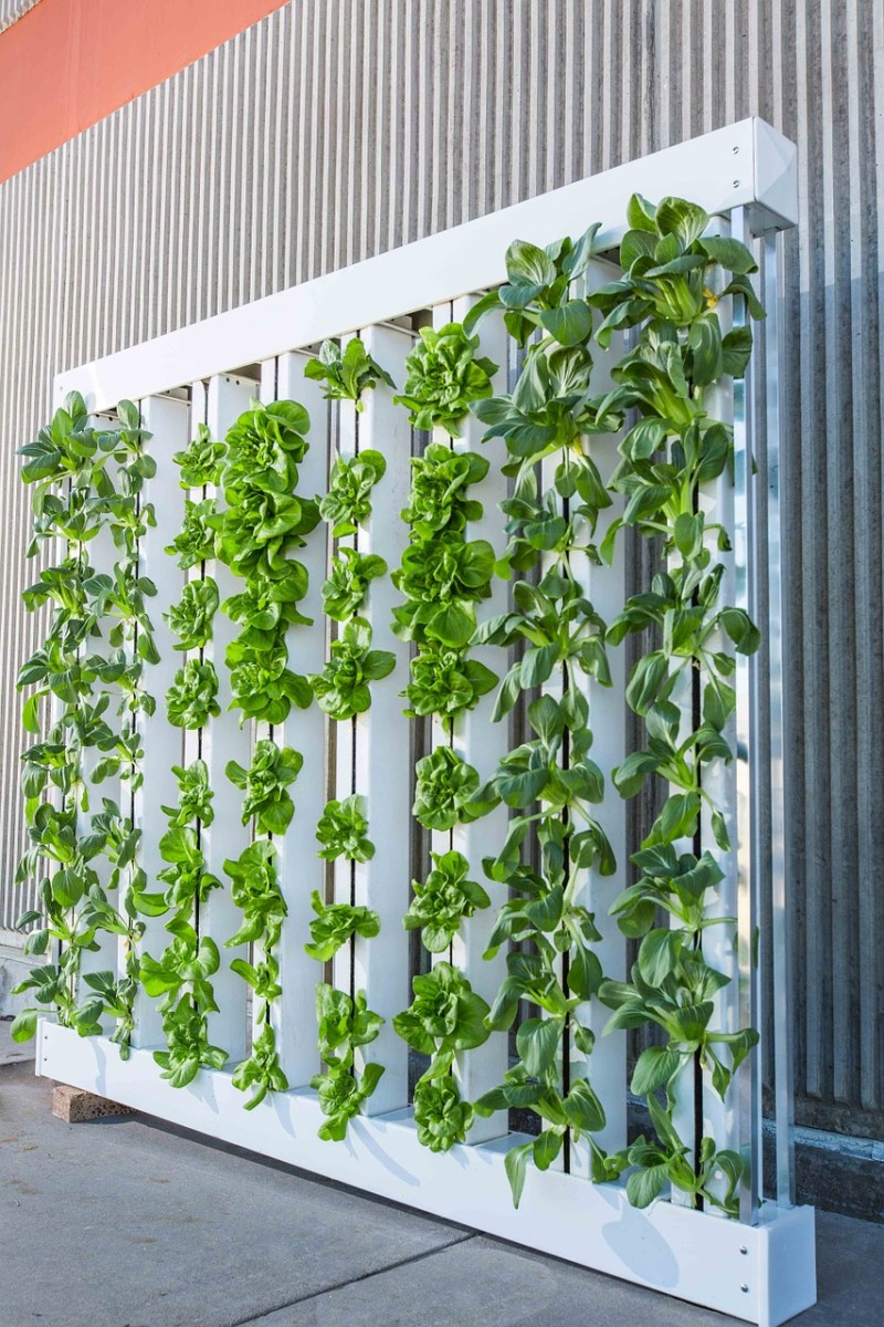 Choosing the Best Plants for Indoor Hydroponic Gardens Dengarden