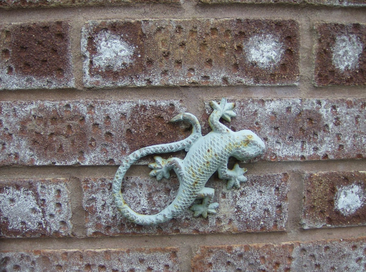 One of my bargain lizards