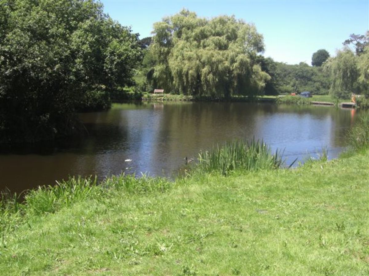 How to build an artificial fishing lake dengarden for Artificial water pond