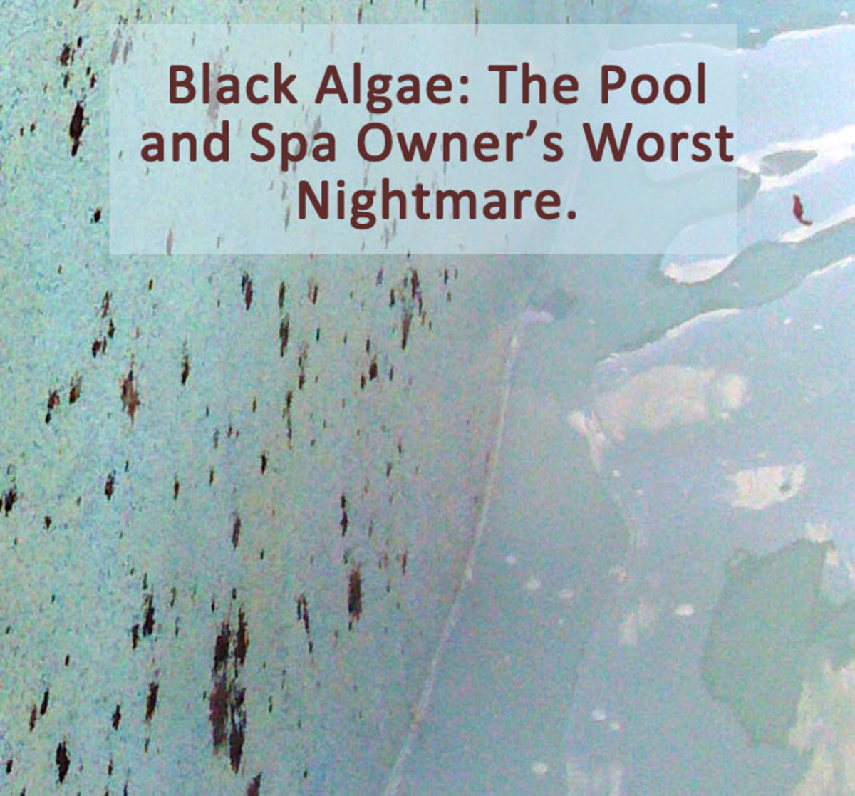 How to kill problem algae in pools and spas for Kill black algae swimming pool