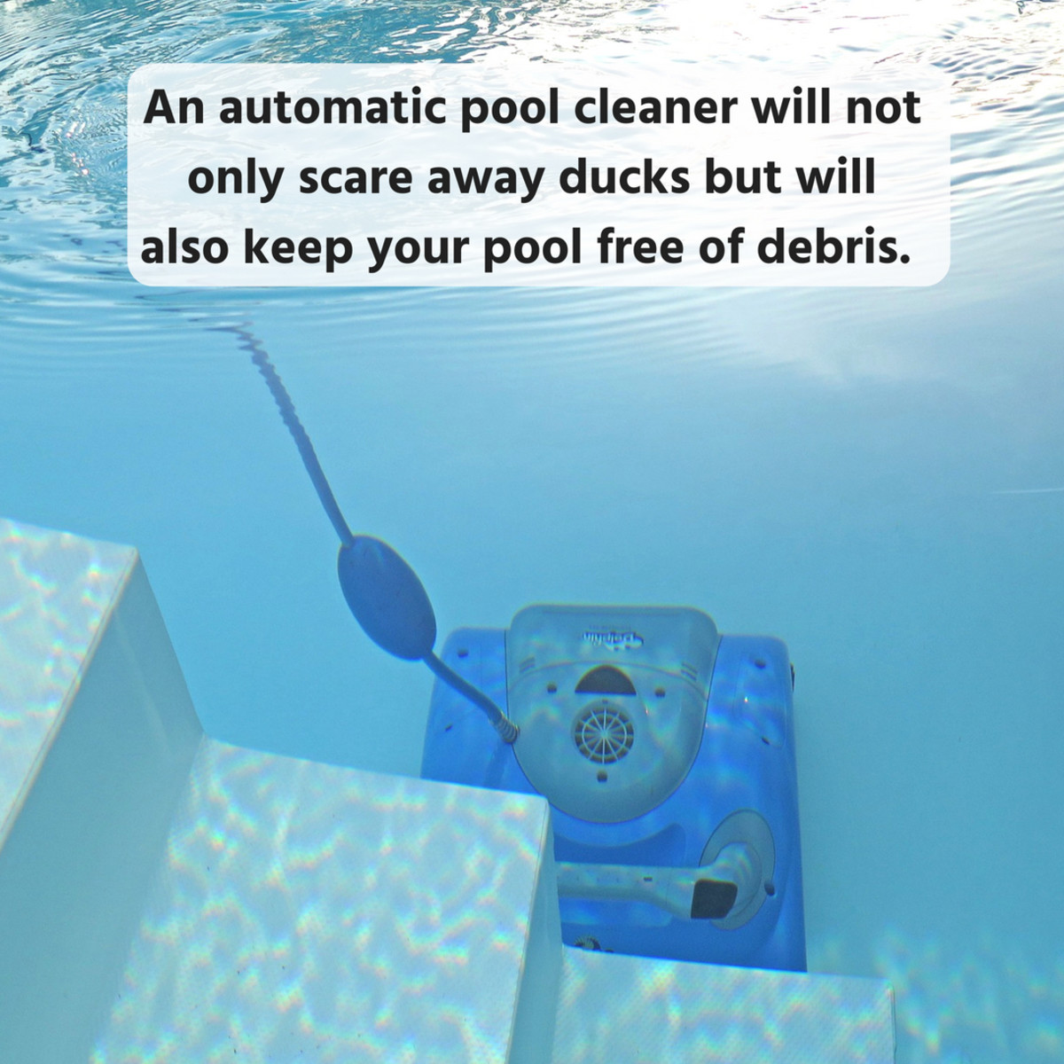10-simple-tips-for-keeping-ducks-away-from-your-pool