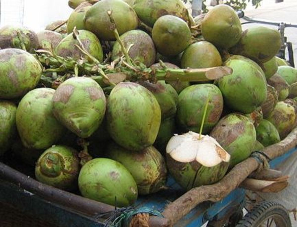 virgin coconut oil eczema