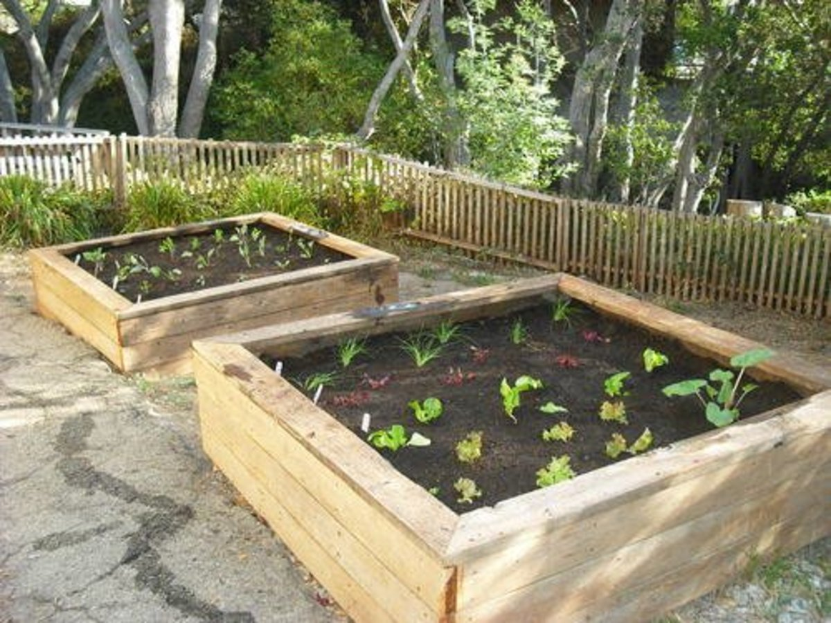 How to plant your first vegetable garden dengarden for Vegetable garden planters