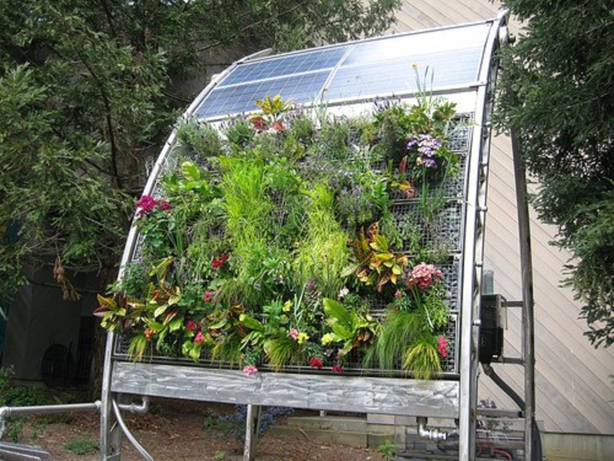 Beautiful Hydroponic Solar Vertical Garden.  Photo courtesy of http://www.flickr.com/photos/irisdragon/2339219124/ under Creative Commons Attribution License