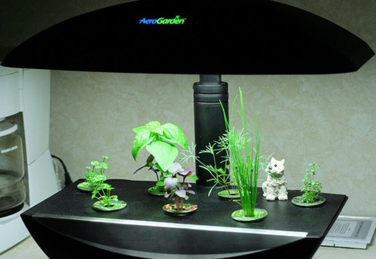 Hydroponic Garden.  Photo Credit: http://www.flickr.com/photos/skye820/2292271231/ under Creative Commons Attribution License