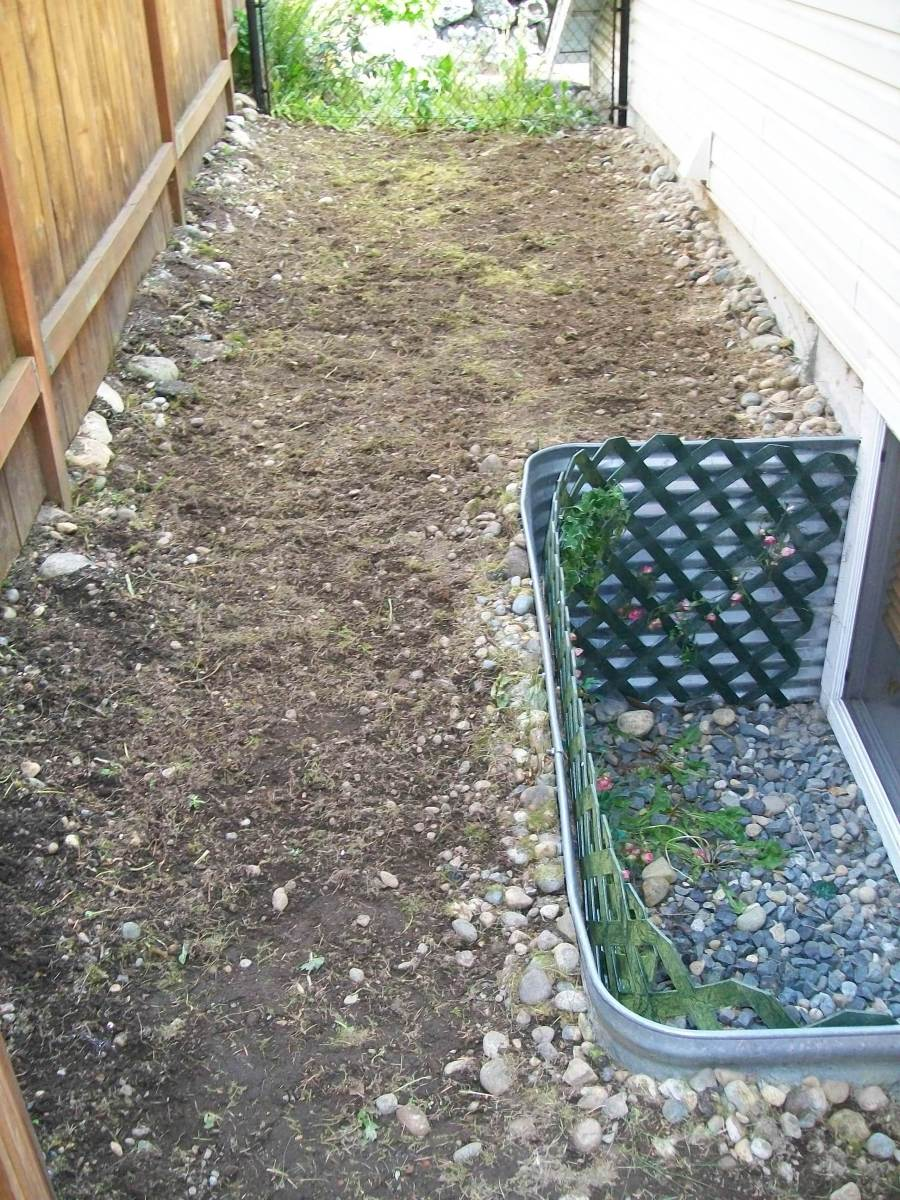 Growing Weed In Your Backyard : How to Remove and Prevent Weeds from Growing in Your Yard  Dengarden