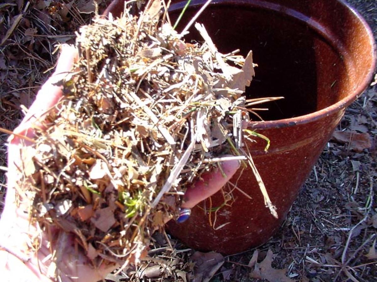 Compost - shredded leaves