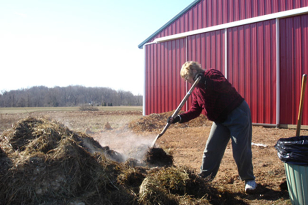Compost - here I am shoveling chicken poop. Check out the steam. That stuff was pretty warm. This was in February.