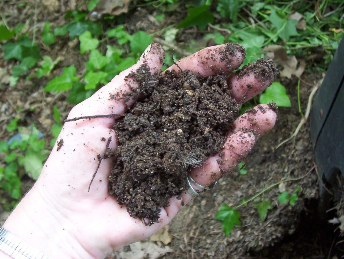 Compost (photo by Dolores Monet)