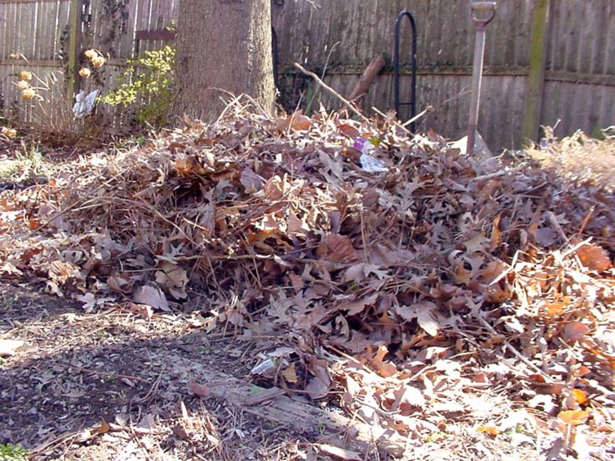 Compost ingredients - raked leaves