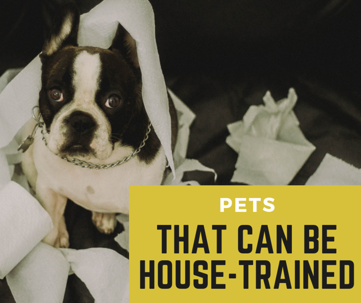 Are you having trouble house-training your pet? Check out these common pets that can be house-trained to make sure you're not fighting an impossible battle.