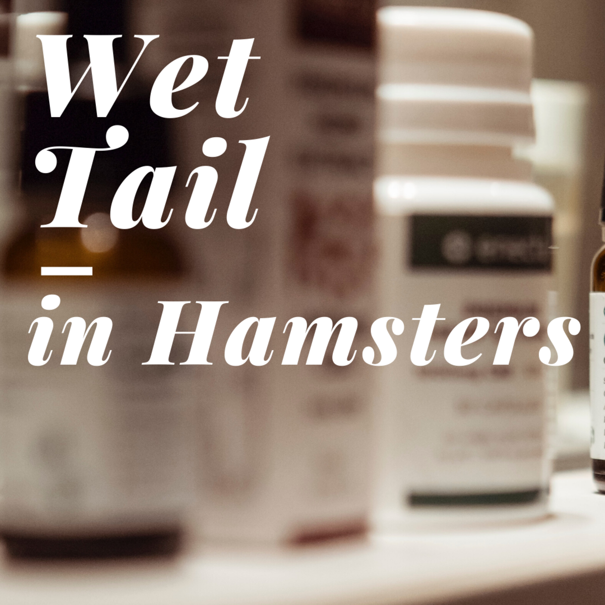 Sick Hamsters: Signs and Treatment of Wet Tail in Hamsters
