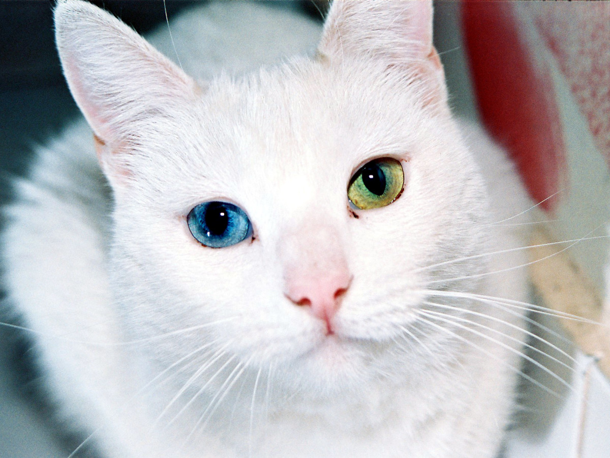 Signs Your Cat May Have Eye Problems