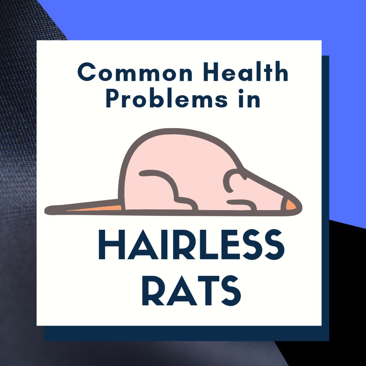 Common Hairless Rat Health Problems