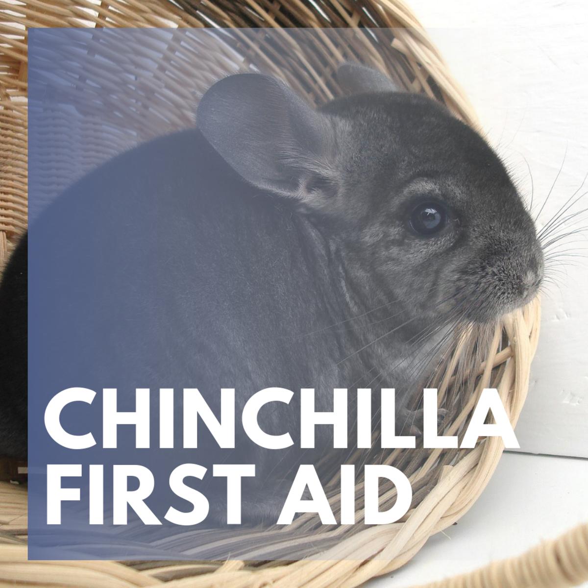 Signs of Common Chinchilla Ailments