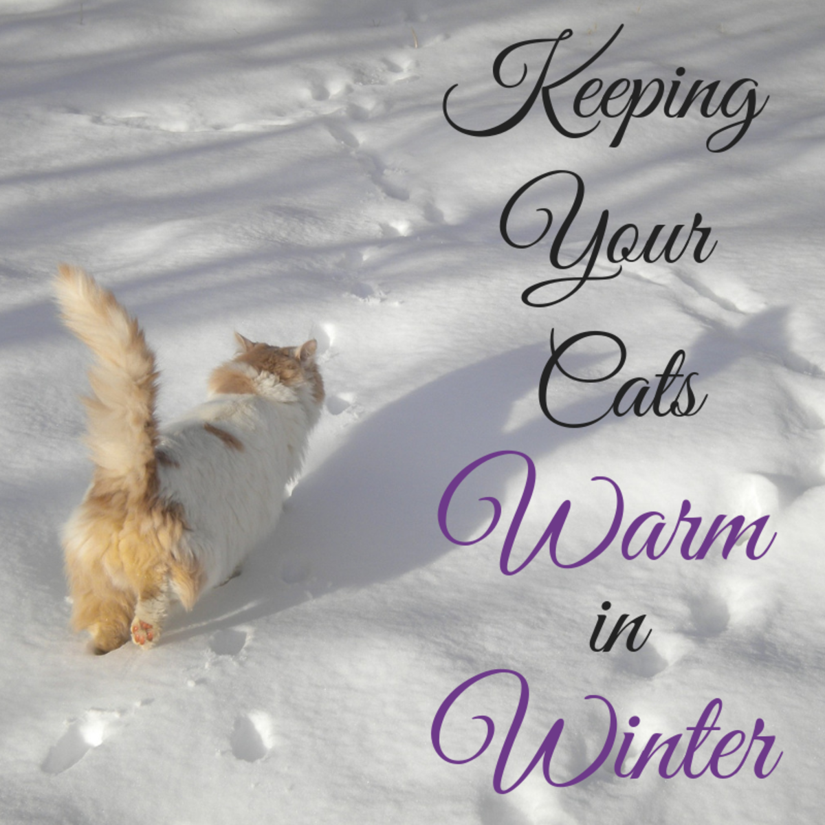 Whether they're your beloved outside cats or just friendly ferals you care for, this article will show you a bunch of different ways to help them make it through a tough winter.