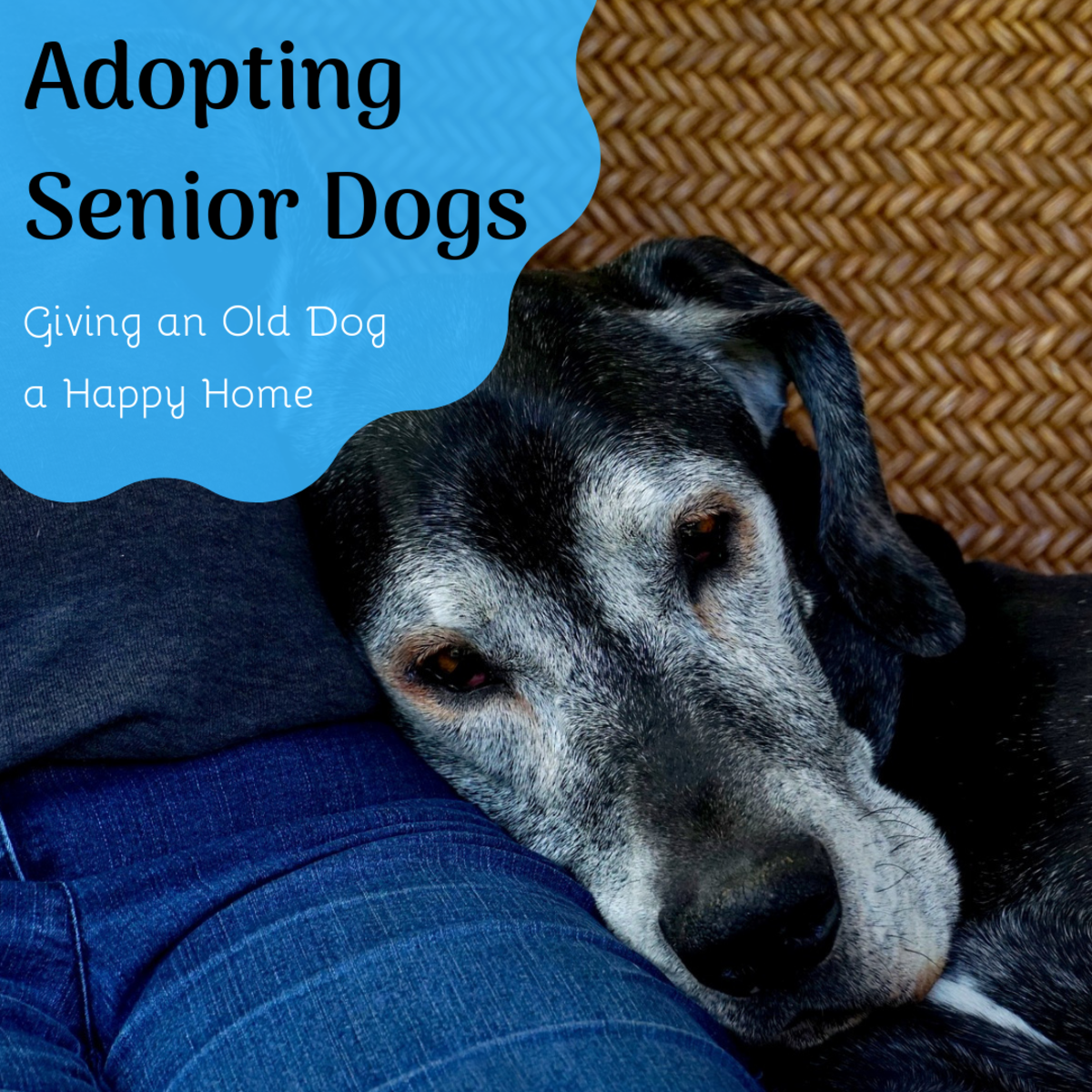 Read about some of the benefits of adopting an older rescue dog.