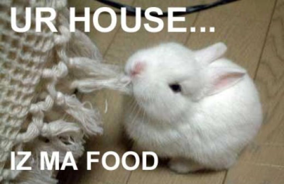 Bad Rabbit Food What Not To Feed Your Bunny Pethelpful