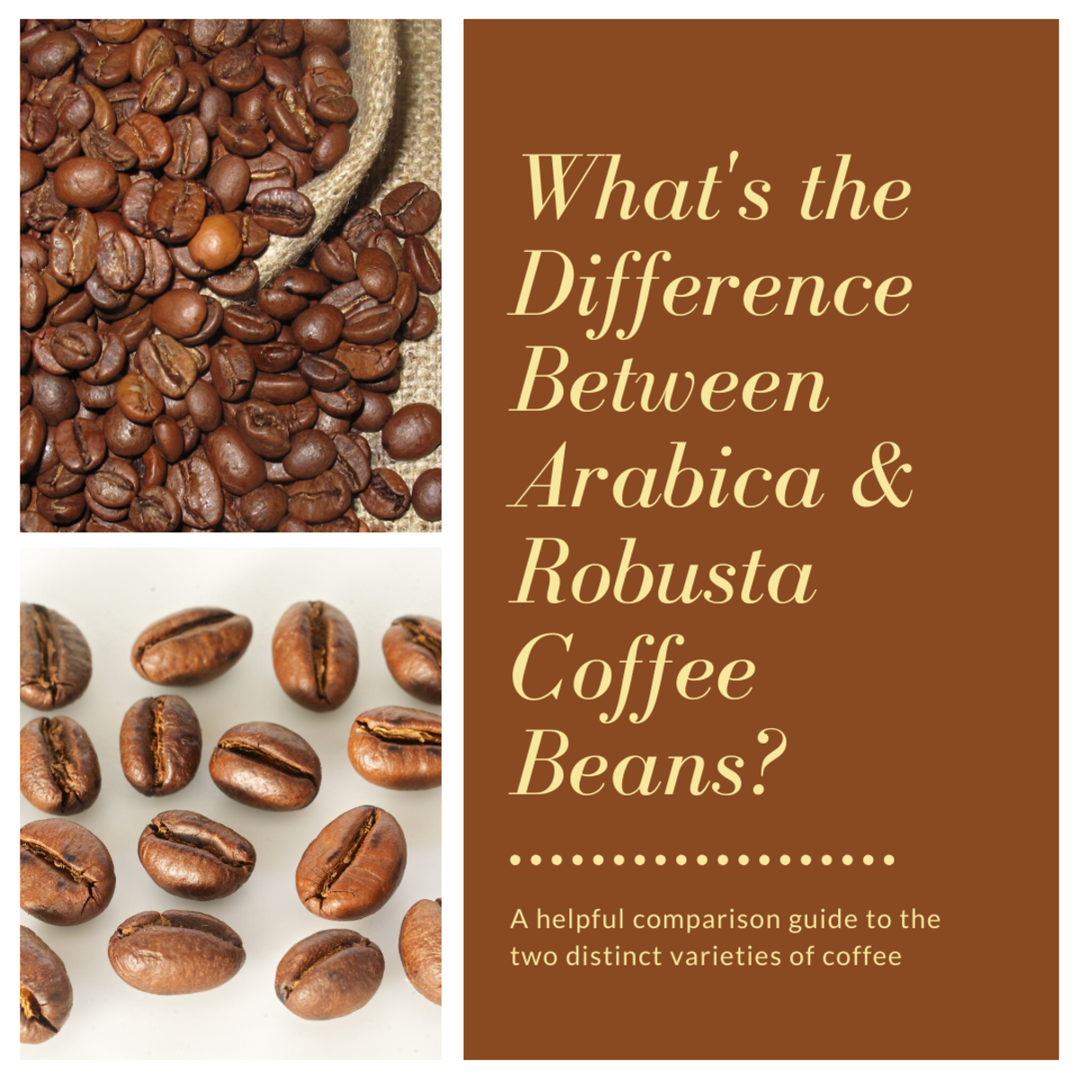 This article will break down the major differences between the two distinct varieties of coffee.