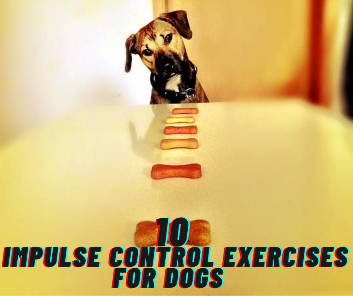 10 Impulse Control Games for Dogs