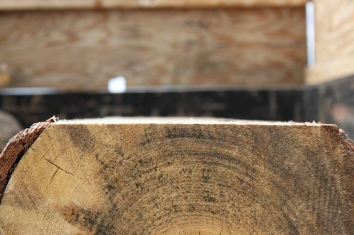Close-Up of the Top of the Log Lopped Off