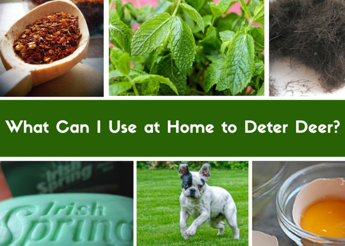 Natural home remedies to deter deer.