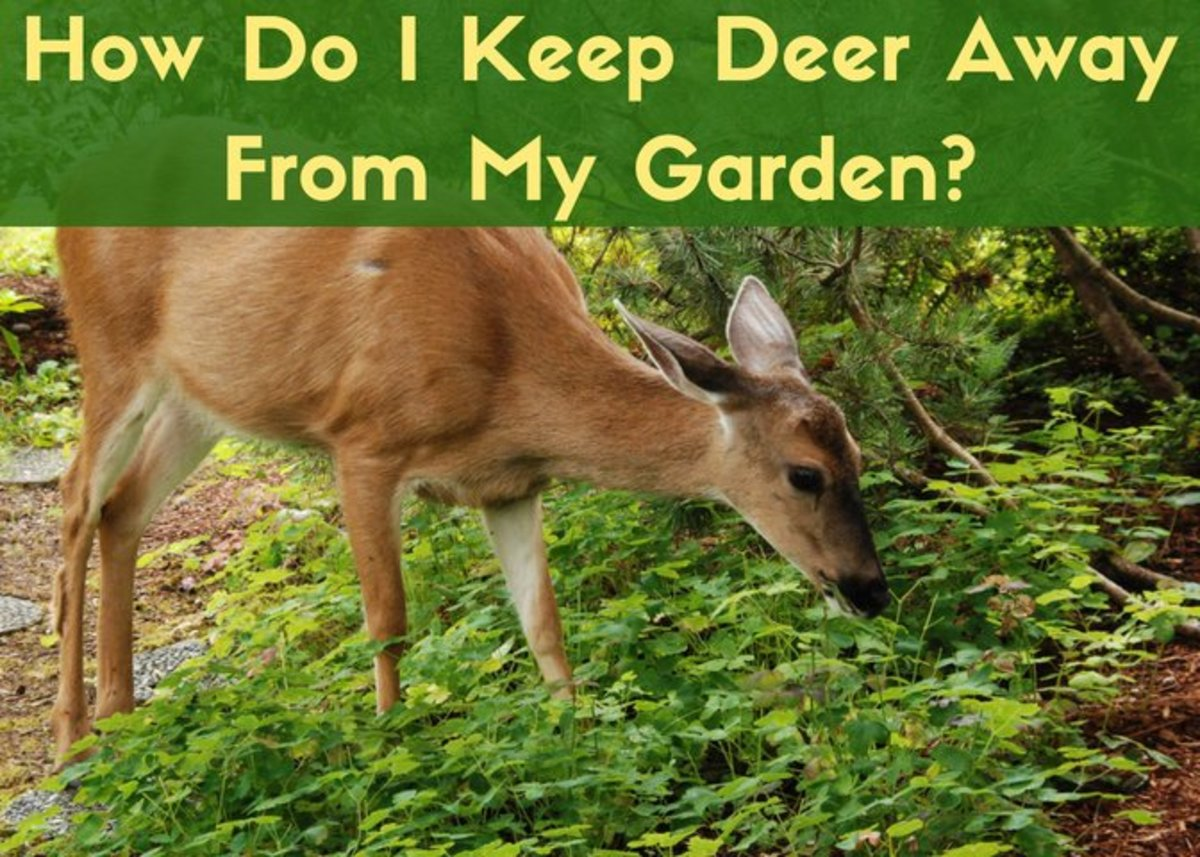 How to deter deer