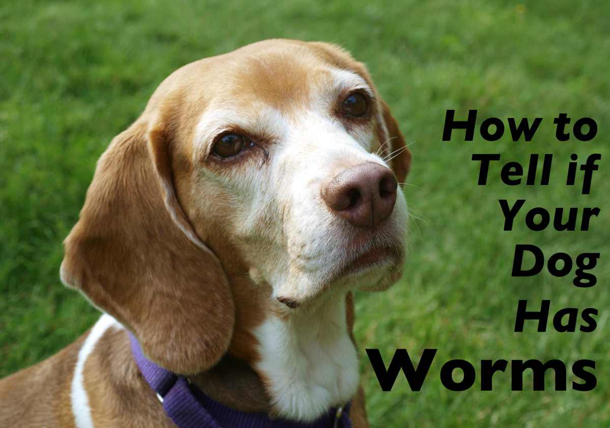 How you can tell if you dog has worms, and what to do about it.