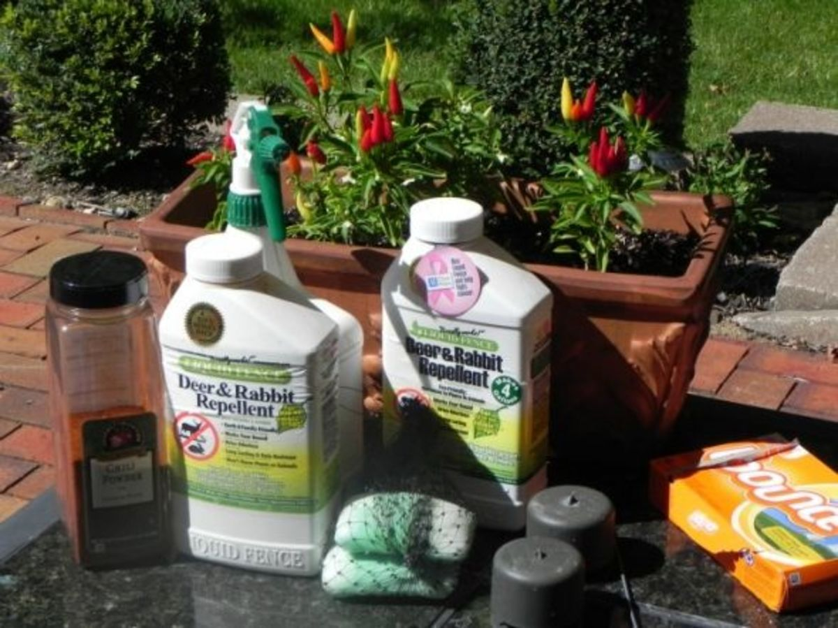 How i saved my garden best deer deterrent ever - How to keep deer out of garden home remedies ...