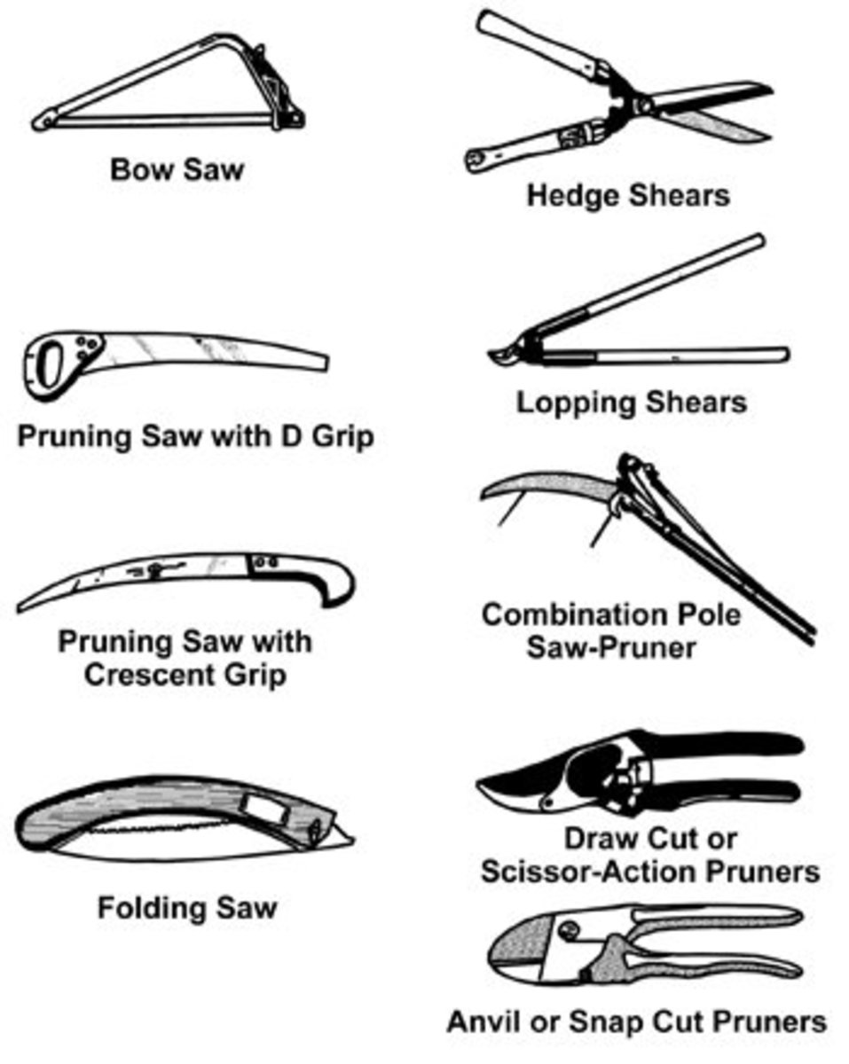 How to prune fruit trees pruning made easy for Garden maintenance tools