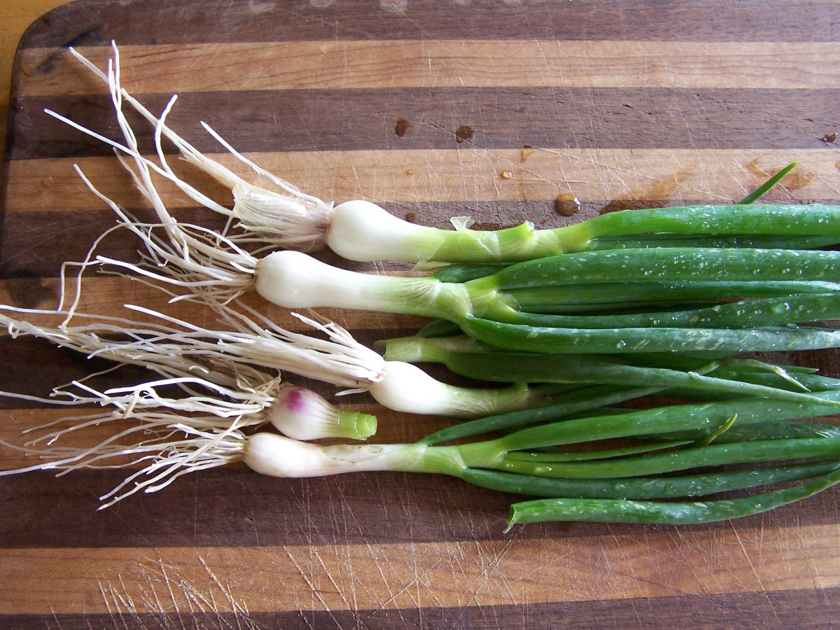 Nice sized bulbs add pleasant flavor to dishes, cooked or raw.