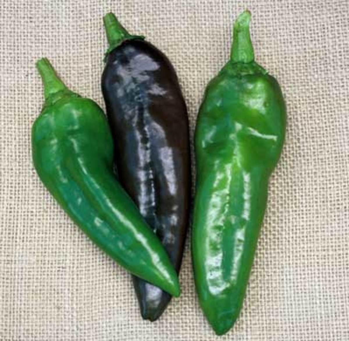 Ahaheim, also know as the New Mexican chile, this moderately pungent fruit is deep green, but turns red at full maturity. Very smooth peppers are 7 1/2 inches long and 2 inches wide and borne on tall, productive plants that offer good foliage cover.