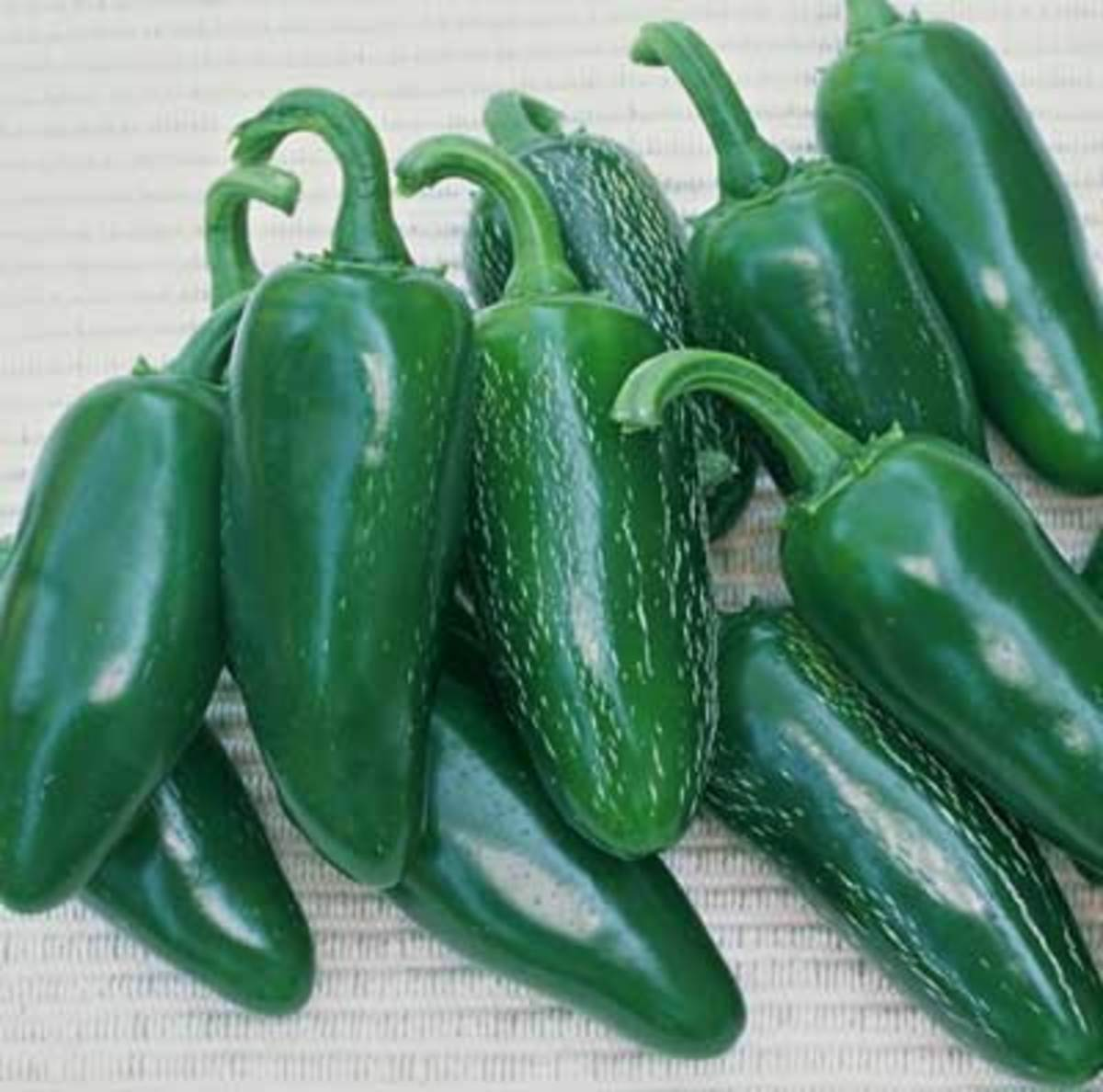 Jalapeno, fiery, thick-walled peppers grow 3 inches long and 1 1/2 inches wide, with rounded tips. Dark green at first, then turning red. Good for fresh use or pickling; famous for nachos and other Tex-Mex dishes.