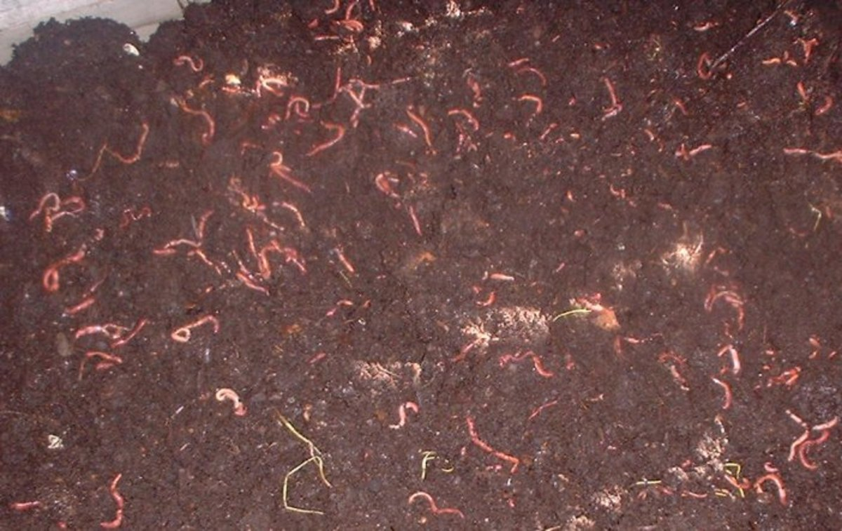 Baby Worms