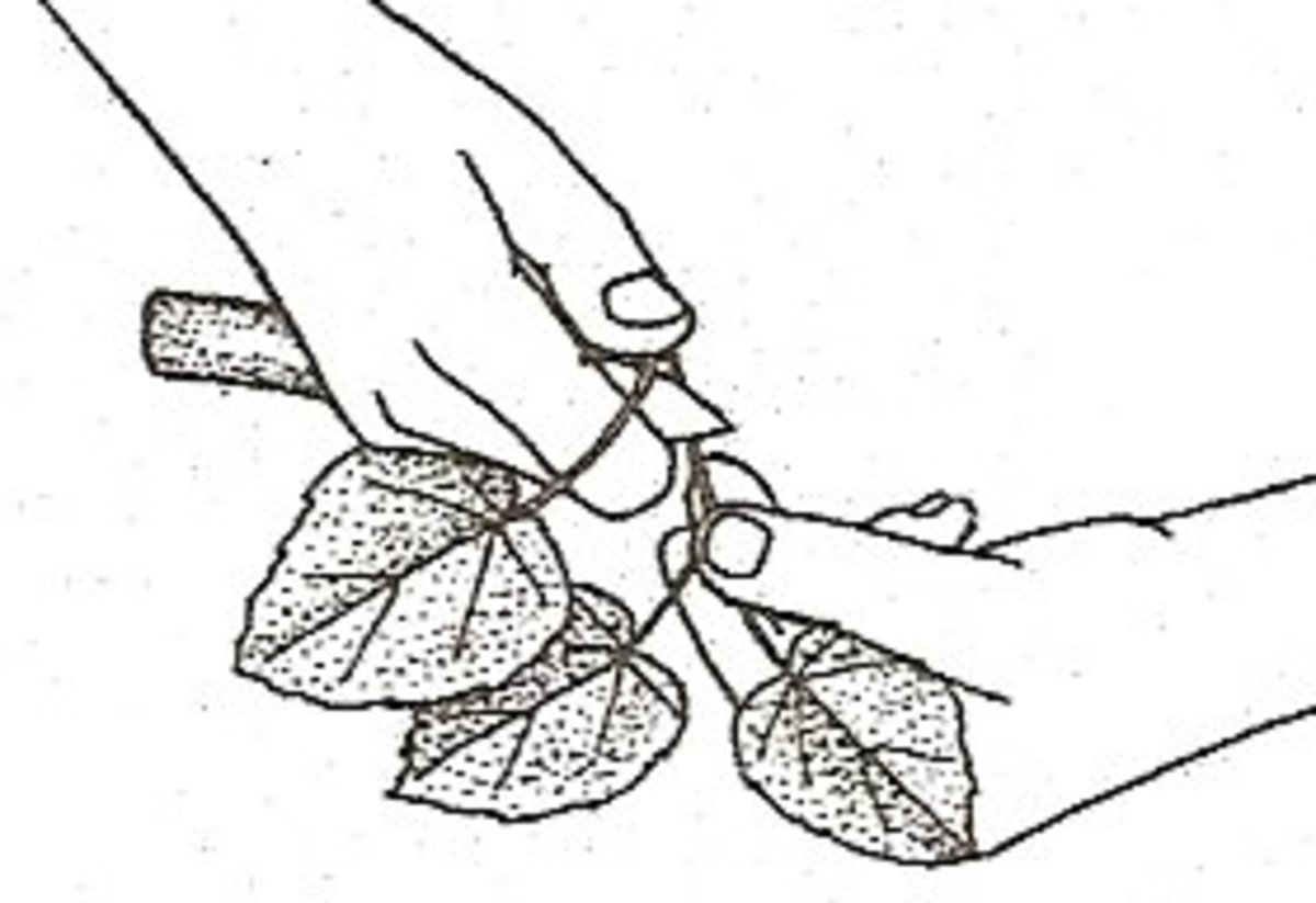 4. Remove the lowest leaf.