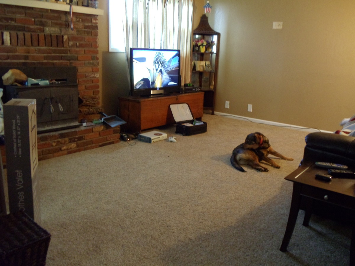 Living room with some of the furniture back in place. One of my dogs Brandy is already enjoying the cozyiness.