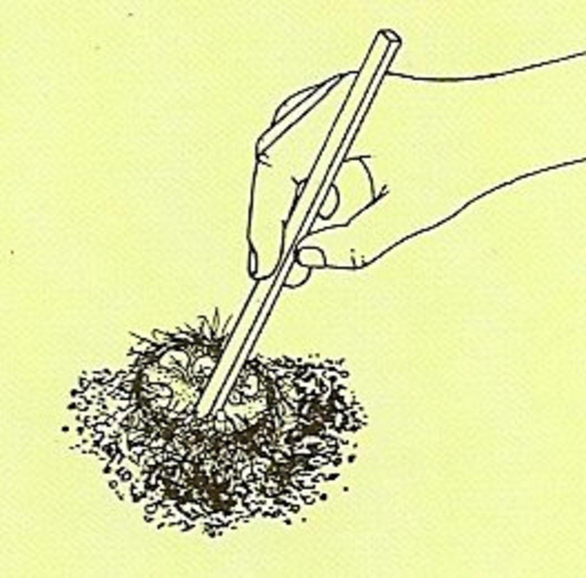 3. Carefully remove stale soil.