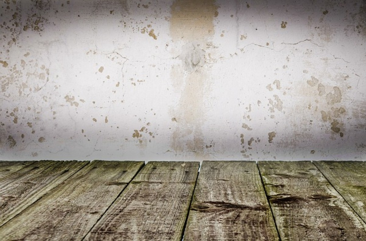 This picture shows various kinds of damage to drywall, including the common fuzzy, brown variety that often occurs due to sloppy wallpaper removal.