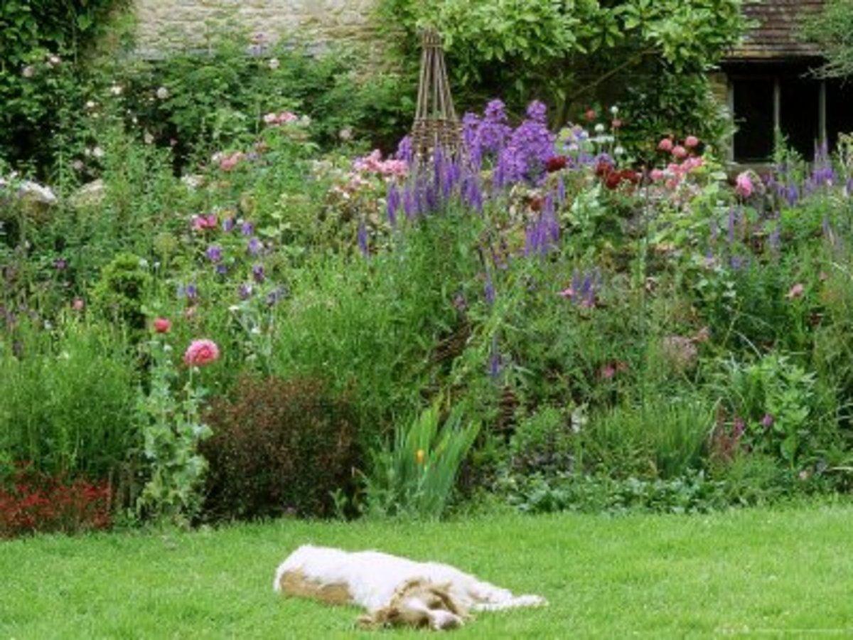 Planting A Dog Friendly Garden Dengarden