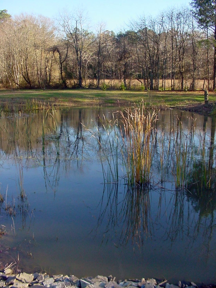 Large Pond Needs No Aeration - Natural Breeze Will Do It