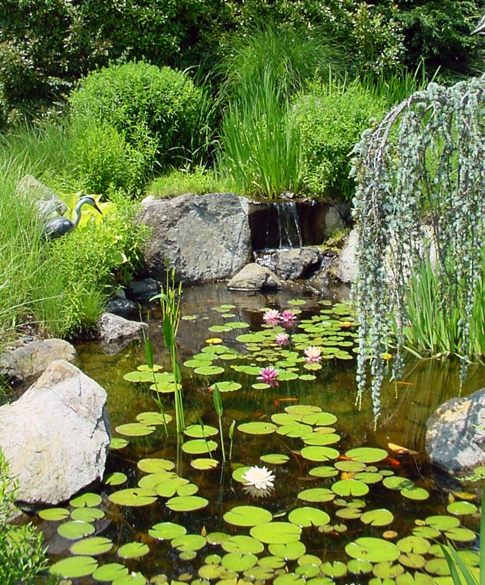A variety of plants creates a natural setting for a pond.