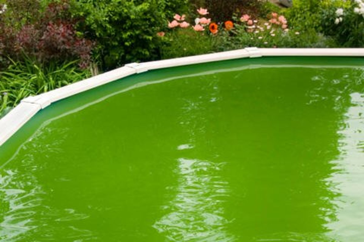 pool with algae