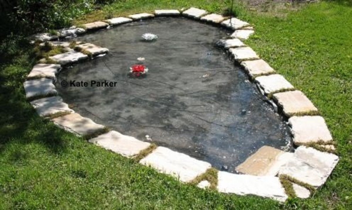 Maintaining Your Pond