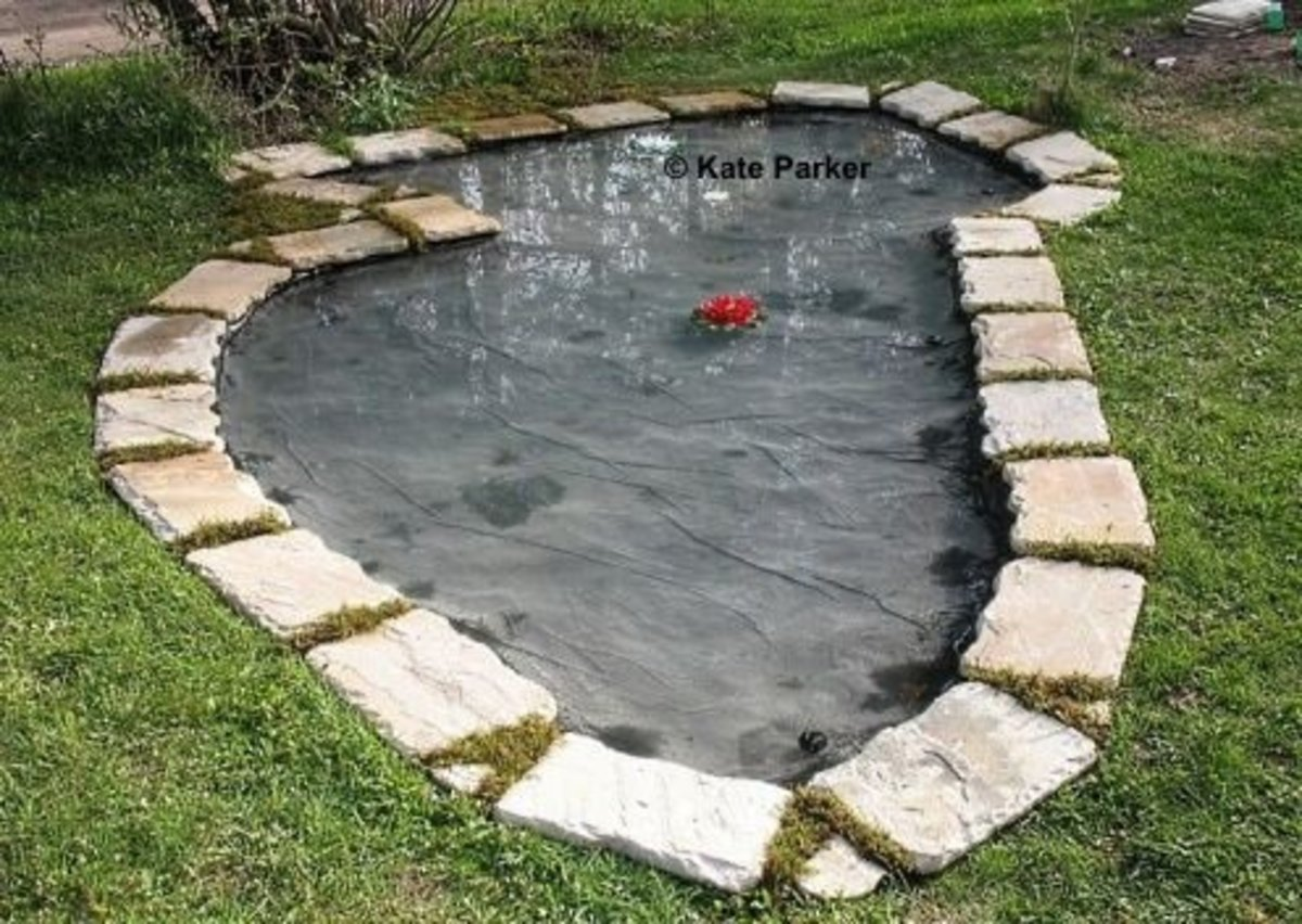 Enjoy Your New Pond!