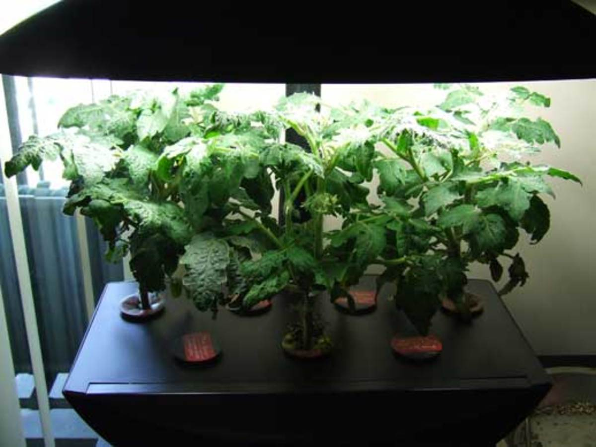 The Aerogarden is an example of an aeroponic system.
