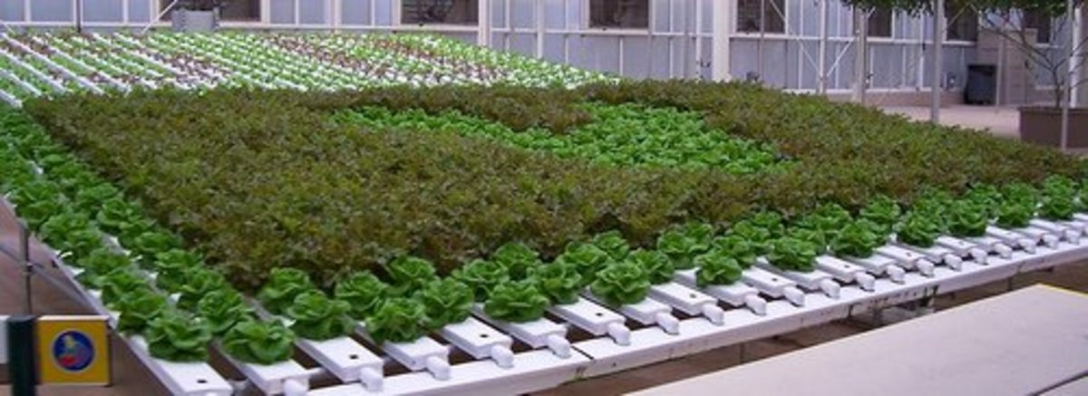 Sustainable Farming - Types of Hydroponic Systems