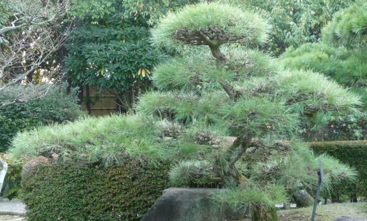 (wikimedia commons; photo by Namazu-tron)