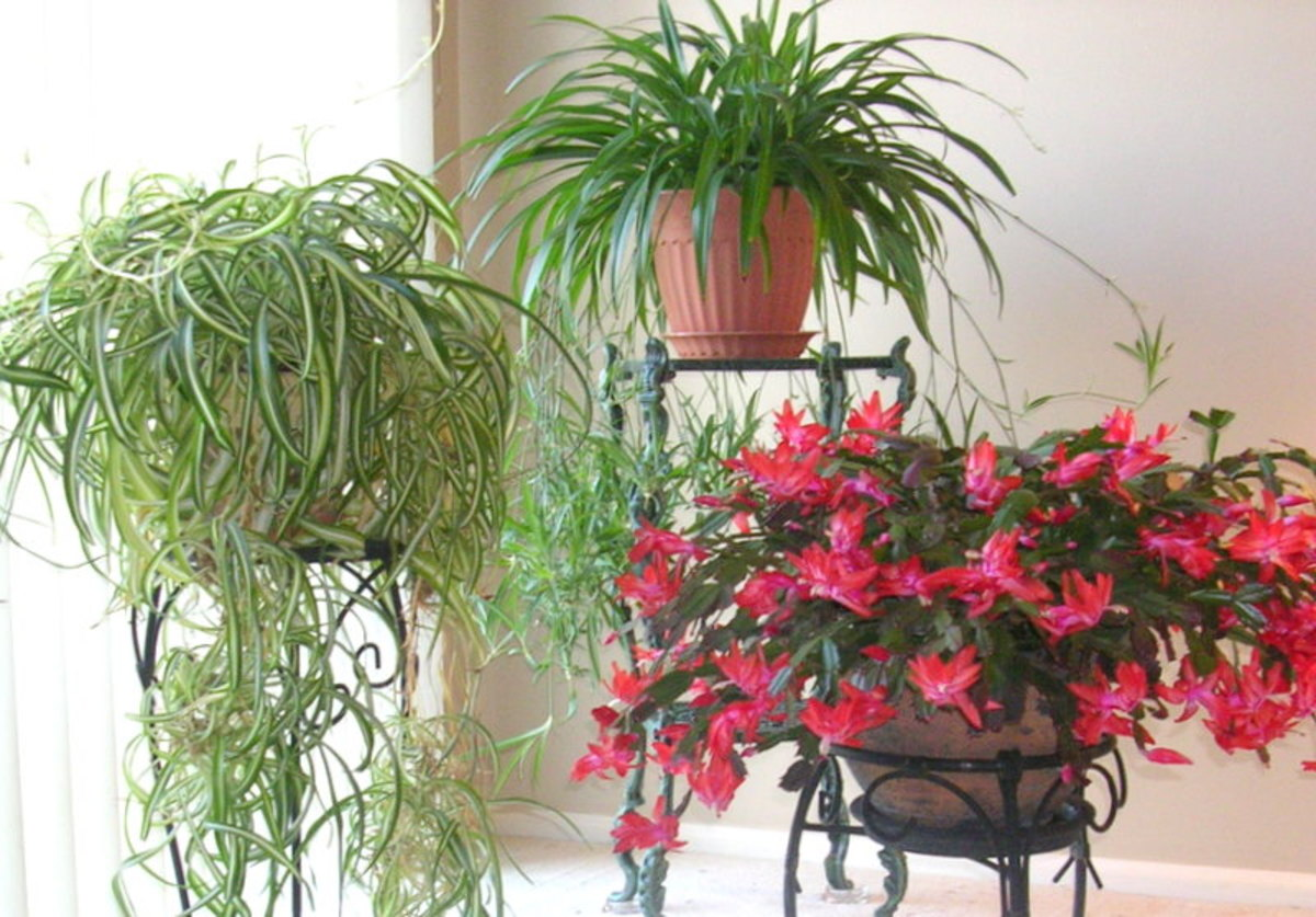 Bringing houseplants in for the winter 10 tips for preparing house plants for healthy winter - Indoor plant varieties ...
