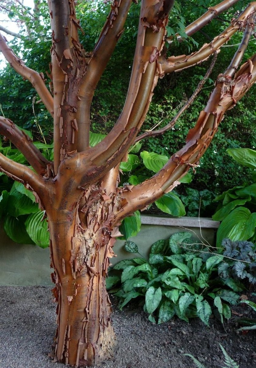 Foto from Gothenburg Botanic garden, by thougforce